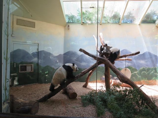Zoo Atlanta Pandas