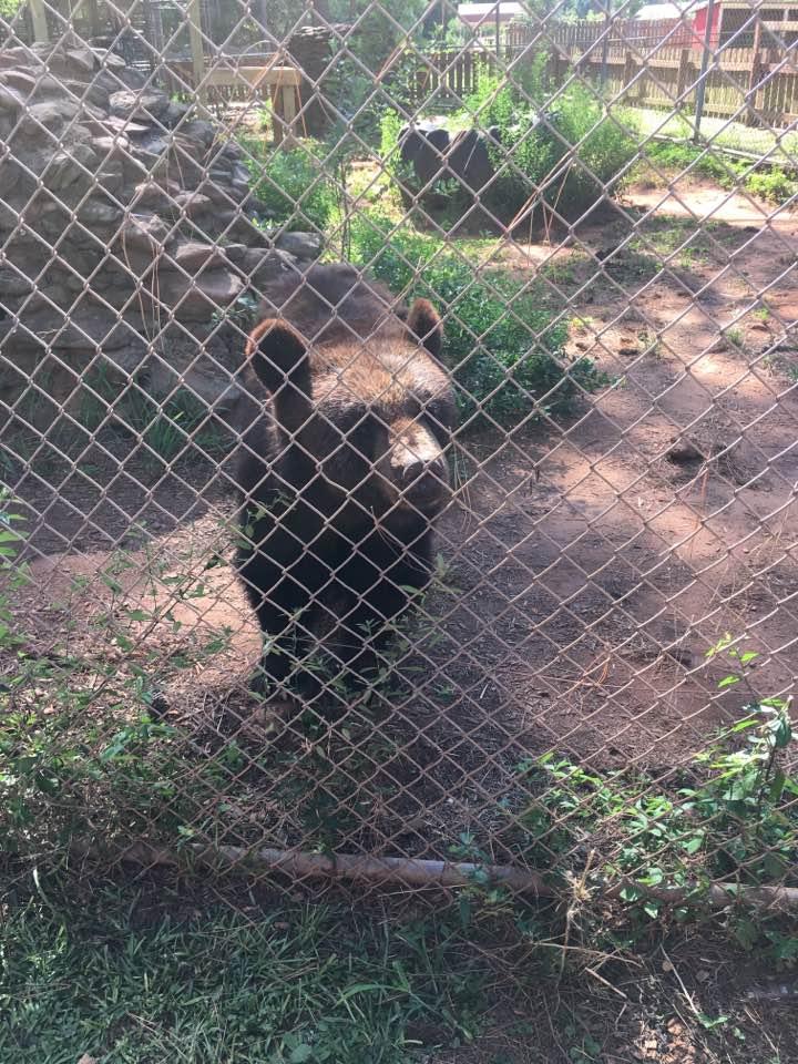 Wild Animal Safari Black Bears