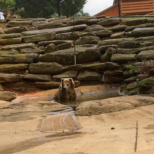 Chestatee Wildlife Preserve and Zoo