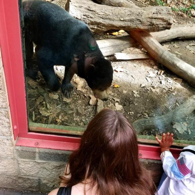 Zoo Atlanta Sun Bears