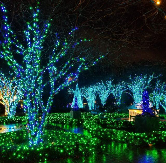 garden lights holiday nights at atlanta botanical garden - Atlanta Botanical Garden Lights
