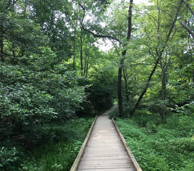 Cochrain Shoals Trail