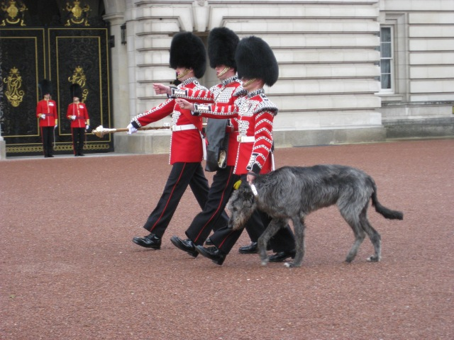 Chaning the Guard, Buckingham Palace