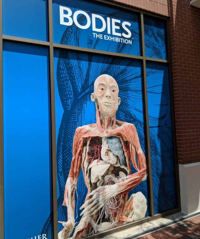 BODIES...The Exhibition