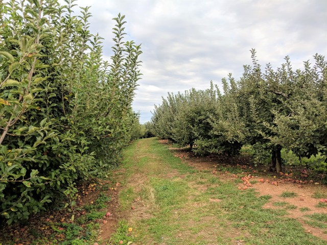 B.J. Reece Orchards