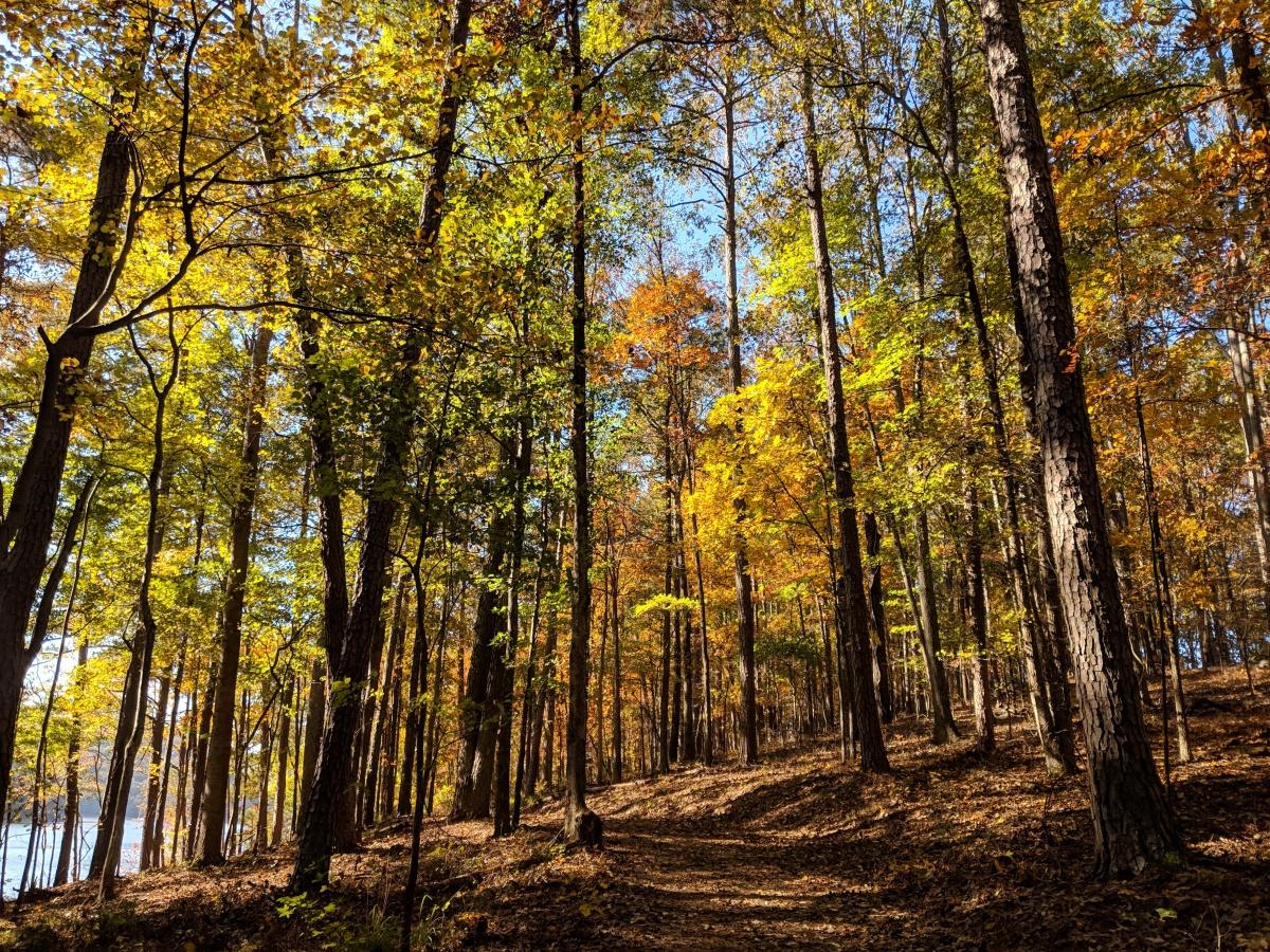 Georgia Hikes: Iron Hill Loop Trail